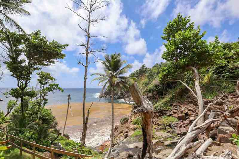 kalinago territory beach and trees dominica | dominica day tours