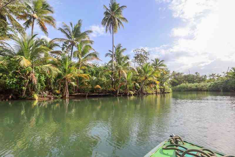 indian river boat tour with palm trees dominica | dominica day tours