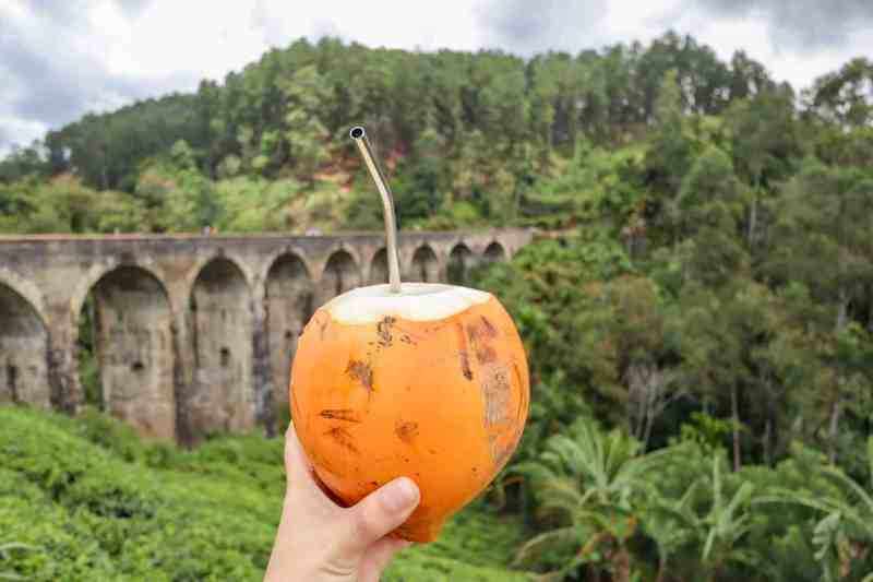 coconut infront of nine arch bridge ella | how much does it cost to visit sri lanka