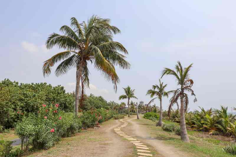 Cijin Island sandy path with palm trees by beach