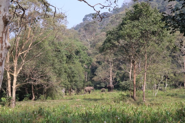 wild elephants in Thekkady National Park   best places to visit in India