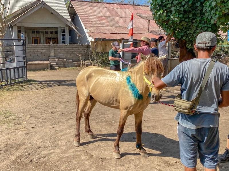 Horse Clinic on Gili T
