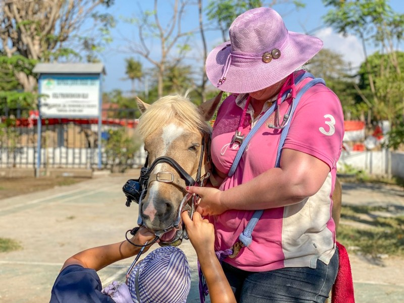 Horse Clinic on Gili T Dental Work