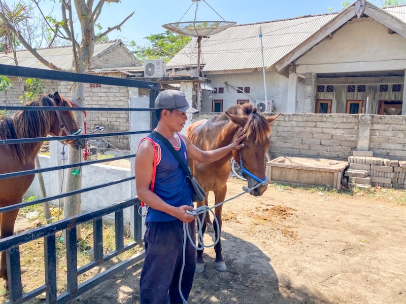 Horse Clinic on Gili T Owner and Horse