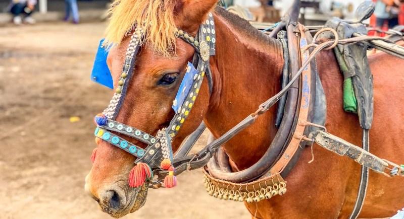 Gili T Horses