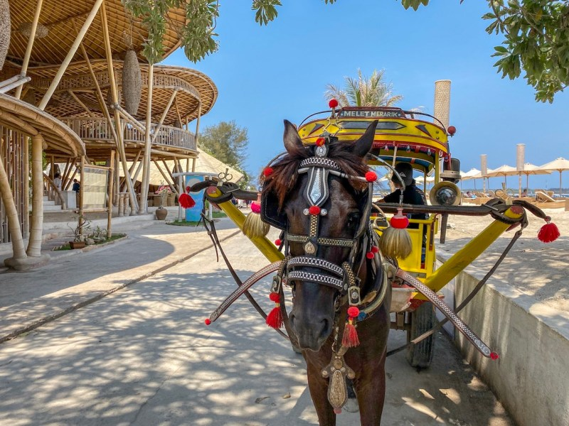 Horse and Cart Cidomo in Gili T