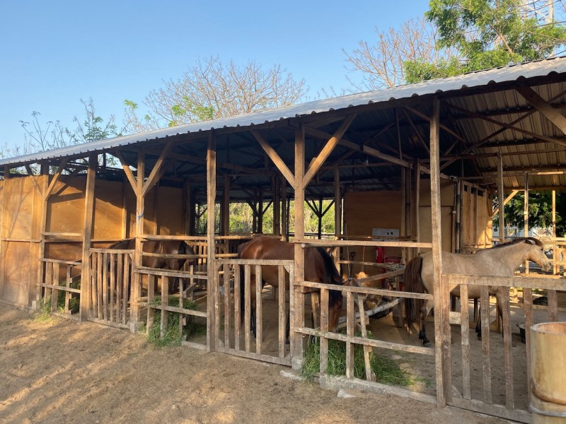 The Horse of Gili Stables