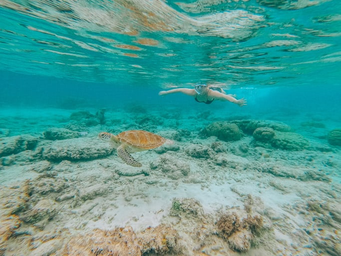 Lombok itinerary, snorkelling turtles