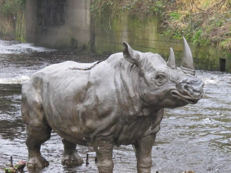hidden gems in Dublin, Dodder Rhino Dublin