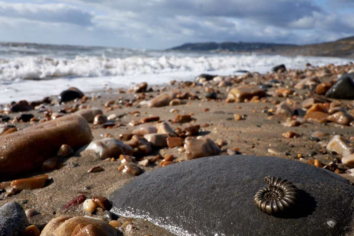 Things to do in Lyme Regis, Fossil Hunting