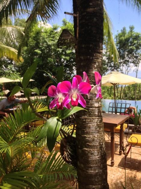 giardini lussureggianti a Sihanoukville
