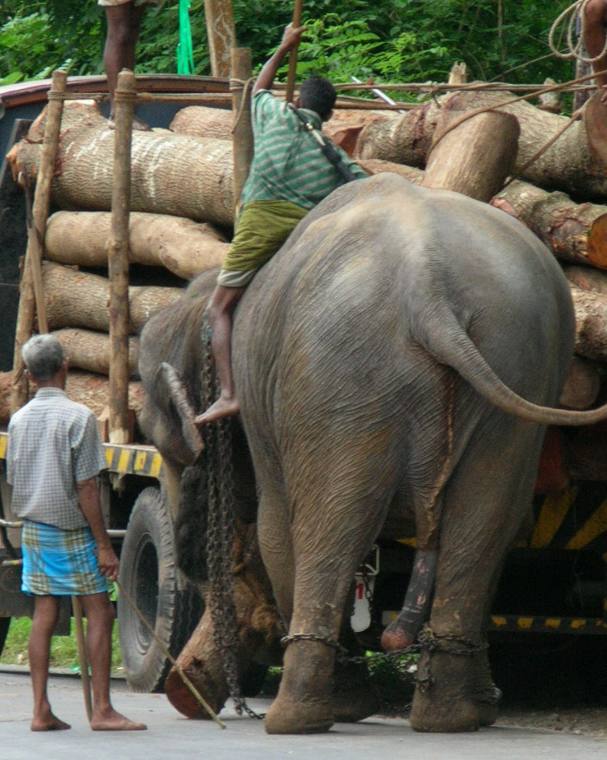 Elephant Working Elephant 8