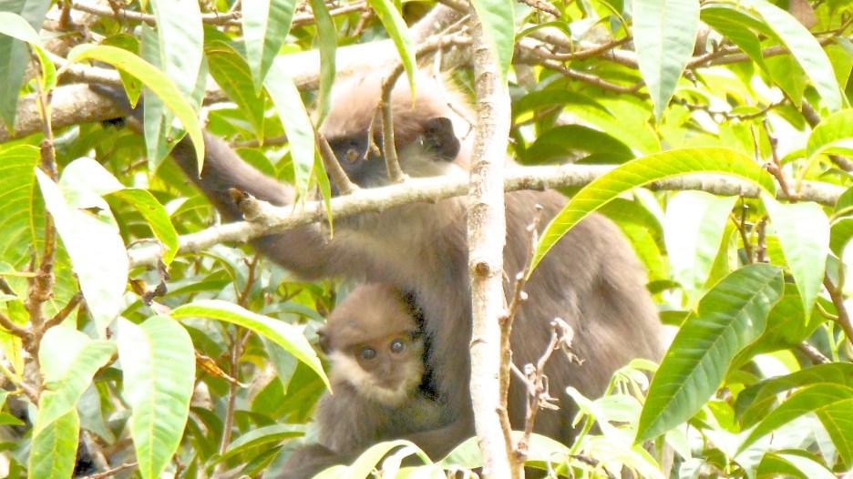 Mrs Hanuman and Baby H, Hiding