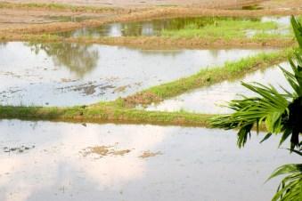 Rain-filled paddyfields