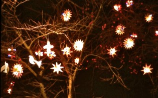 Lights and Birds in the trees