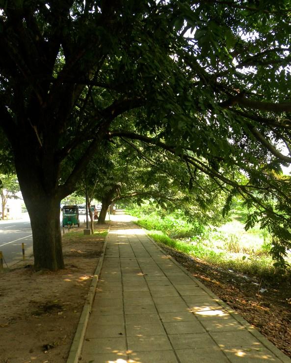 The Footpath 2