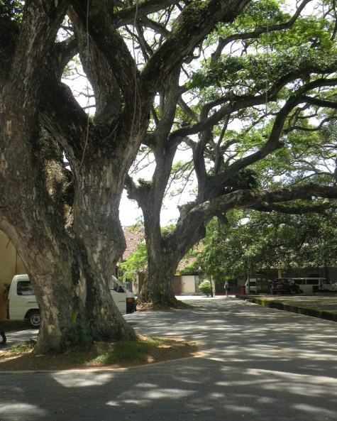 Outdoors, Under the Trees, Galle