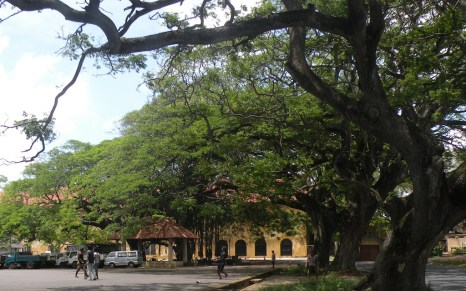 Surrounded by massive old trees, the square on the weekend is an ocean of calm, reclaimed by the boys for street cricket matches in the cool shade