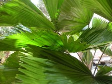 shots around a fan palm 5