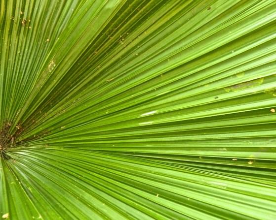 Shots around a fan palm