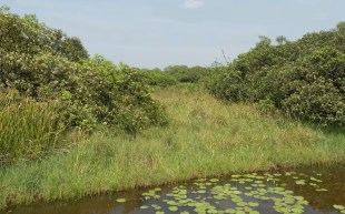 Moated islands are fast being reforested and will be sanctuaries for birds and other wildlife