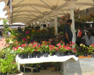 A Morning at the Flower Market 2