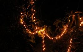 Romancing the Light 6