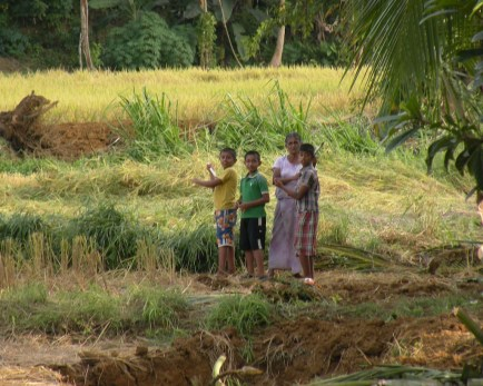 Playtime in the Paddy Fields 3