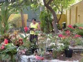 Making a Garden 10