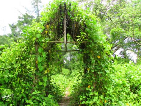 Jungle-like trails in the mini island.