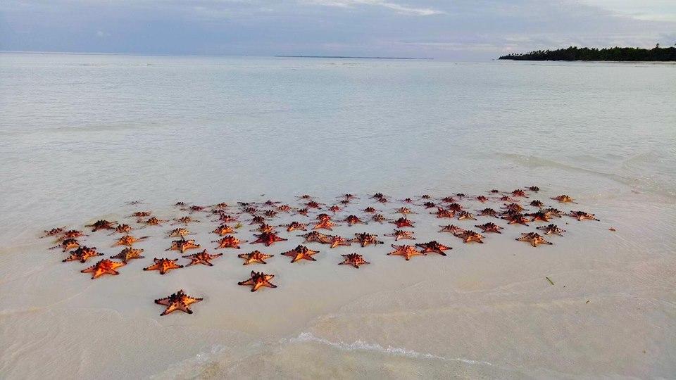 Starfish Island, Balabac Palawan