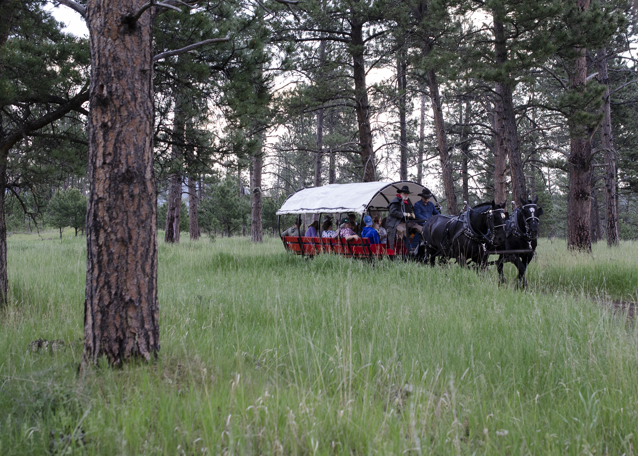 Palmer Gulch covered wagon on the trail