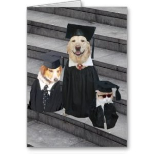 funny_dog_graduation_card-p137595474087171570f42_325