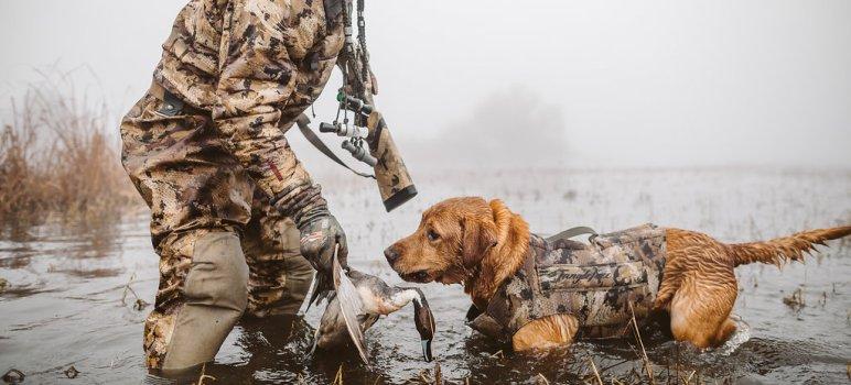 dog hunting vest