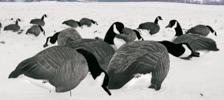 best goose decoys