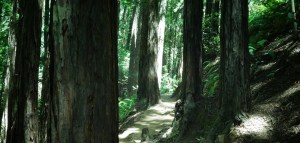 hero_slide_woods