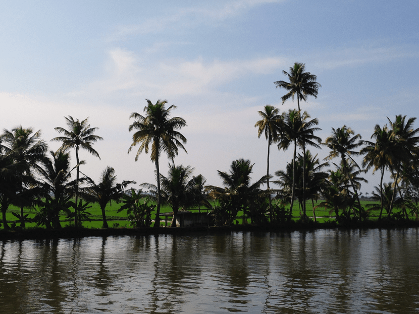 coconut palms kerala backwaters