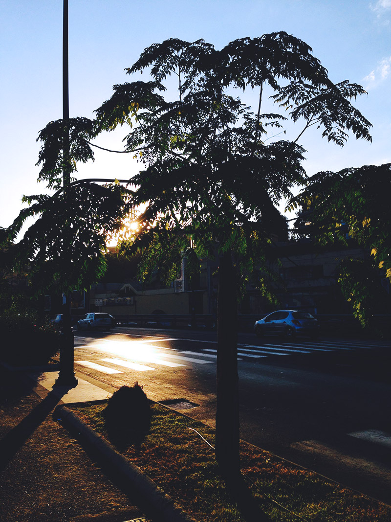 live-deaf-family-sicily-street-sunshine-trees