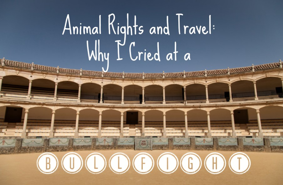 bullfight seville