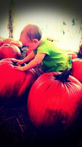 Sophia in the Pumpkin Patch 2014