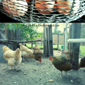Fresh eggs and our Lady Hens.