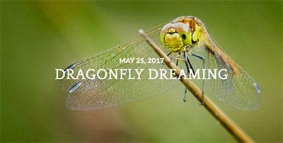 dragonflyblog