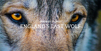 wolf-blog