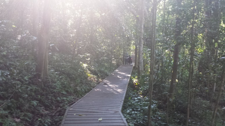 Boardwalks keep tourists from damaging the flora