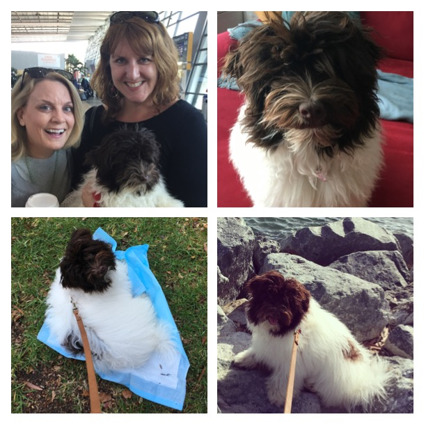 From Dog Mules to potty training, to walks along the harbor, it's been an adventure!