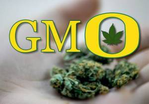 Monsanto Creates First Genetically Modified Strain of Marijuana