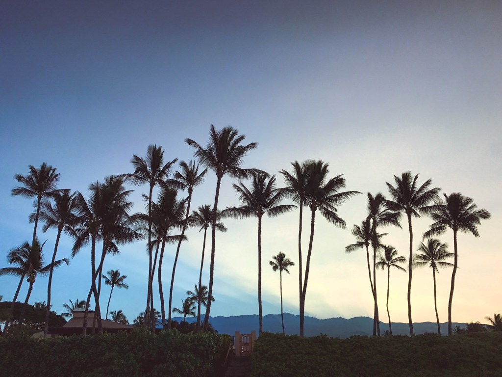 maui, hawaii, palm trees, honeymoon