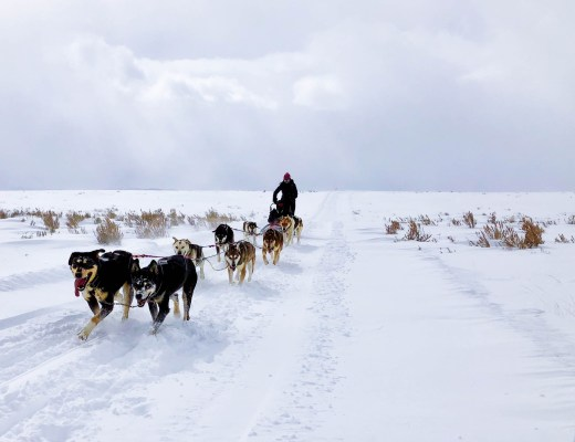 Dog Sledding, Where to go dog sledding, dog sledding in Colorado, dog sledding Steamboat Springs, Steamboat Springs things to do, Dog sledding experience, bucket list, bucket list travel, Colorado winter, Steamboat Springs, Colorado, #dogsledding #steamboatsprings #travelcolorado #bucketlist #travelmore