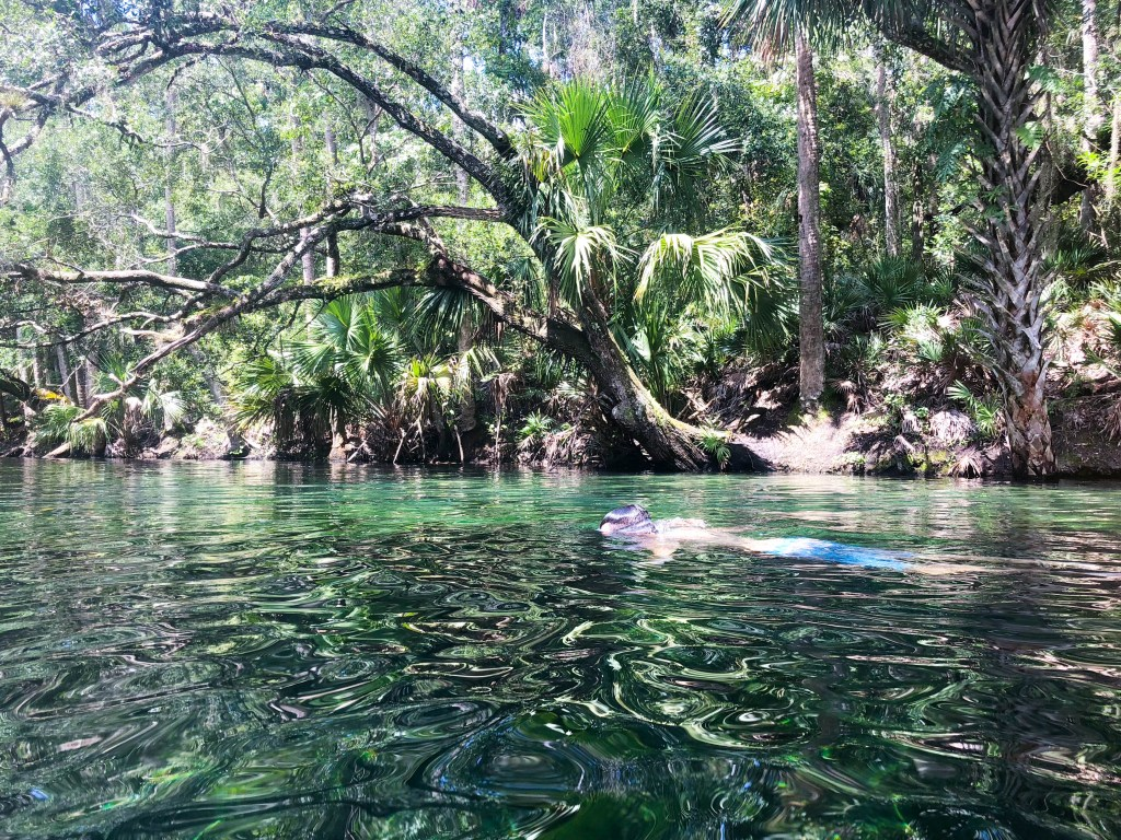 Snorkeling, Blue Spring State Park, Central Florida, Things to Do