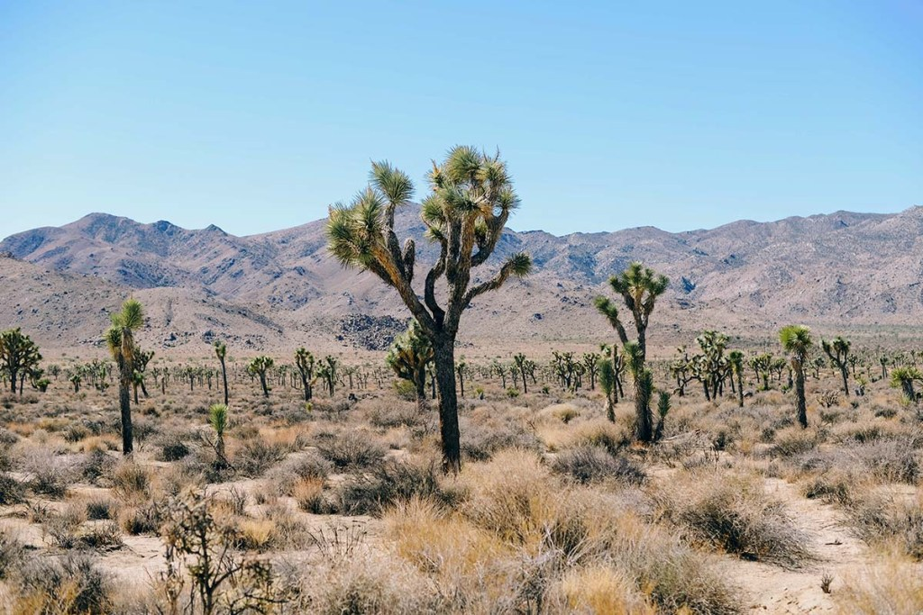 Cool places to stay in Joshua Tree